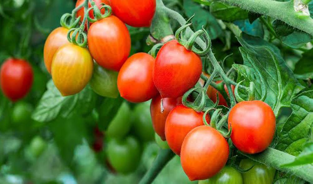Plant Growth Stimulators