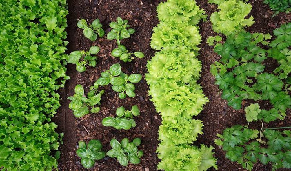 Plant Micro Nutrients